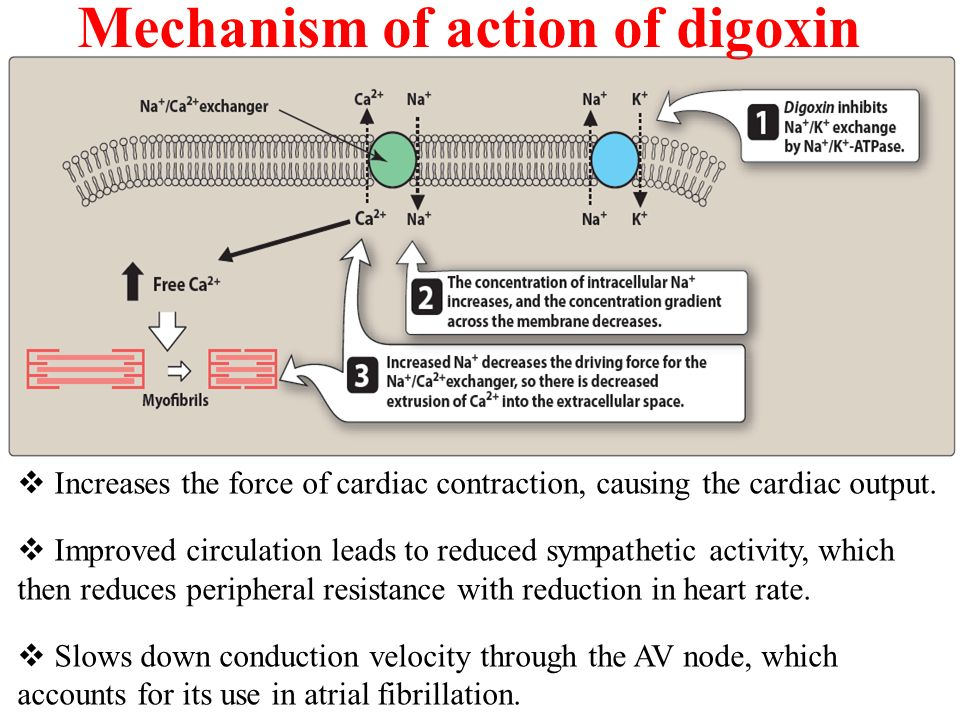 Image result for digoxin mechanism of action atrial fibrillation