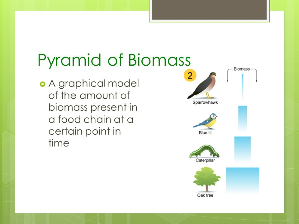 Topic 2 – The Ecosystem Structure IB Topics Ppt Video