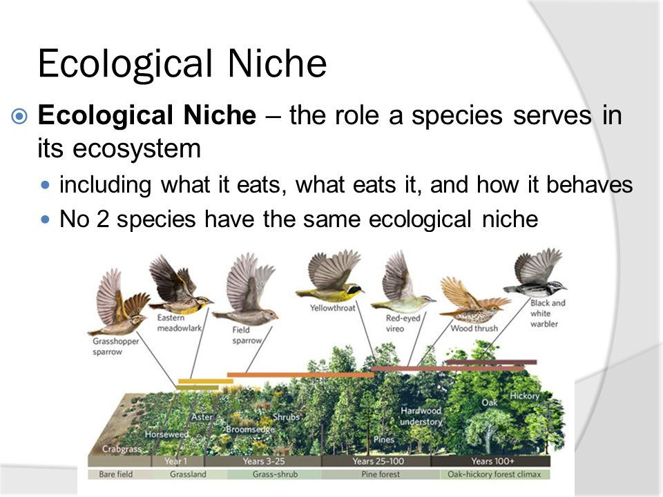 Chapter 25 Food Webs And Ecological Pyramids Httpswww