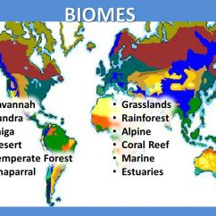Temperate Forest Food Web Diagram 2006 Jetta Tdi Fuse Biomes Savannah Grasslands Tundra Rainforest Taiga Alpine Desert - Ppt Video Online Download