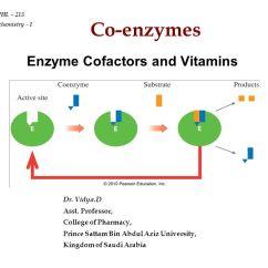 Diagram Of The Atp Molecule Pedestal Fan Wiring Enzyme Cofactors And Vitamins - Ppt Video Online Download