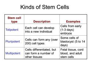 Stem Cells  ppt video online download