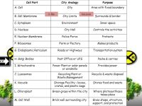 Cell City Analogy Worksheet Answers - resultinfos