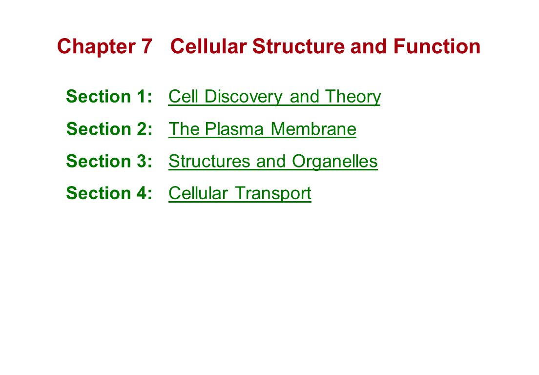 Chapter 7 Cellular Structure And Function