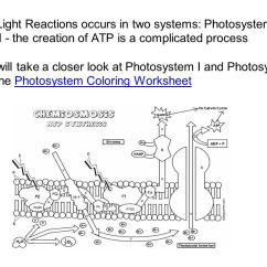 Light Reactions Photosystem Diagram Electrical House Wiring Diagrams Chapter 7 Photosynthesis Ppt Video Online Download