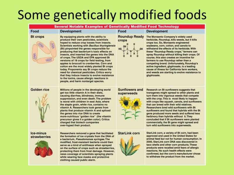 GMO Food Pros and Cons