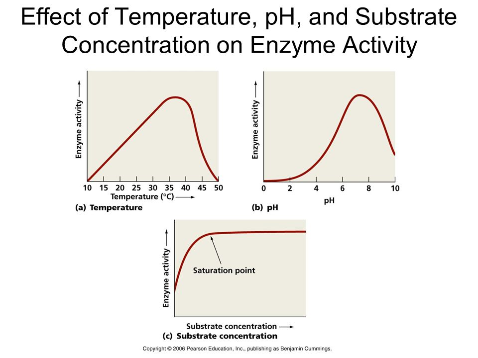 Enzyme and temperature experiment. Pearson. 2019-03-01