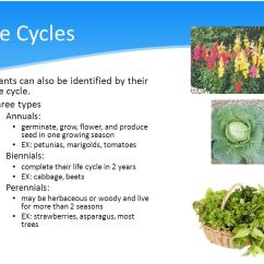 Strawberry Fruit Diagram Glock 19 Parts Using Plant & Life Cycles To Classify Plants - Ppt Video Online Download