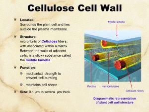 Cell Biology & Biochemistry Series:Set 3  ppt video