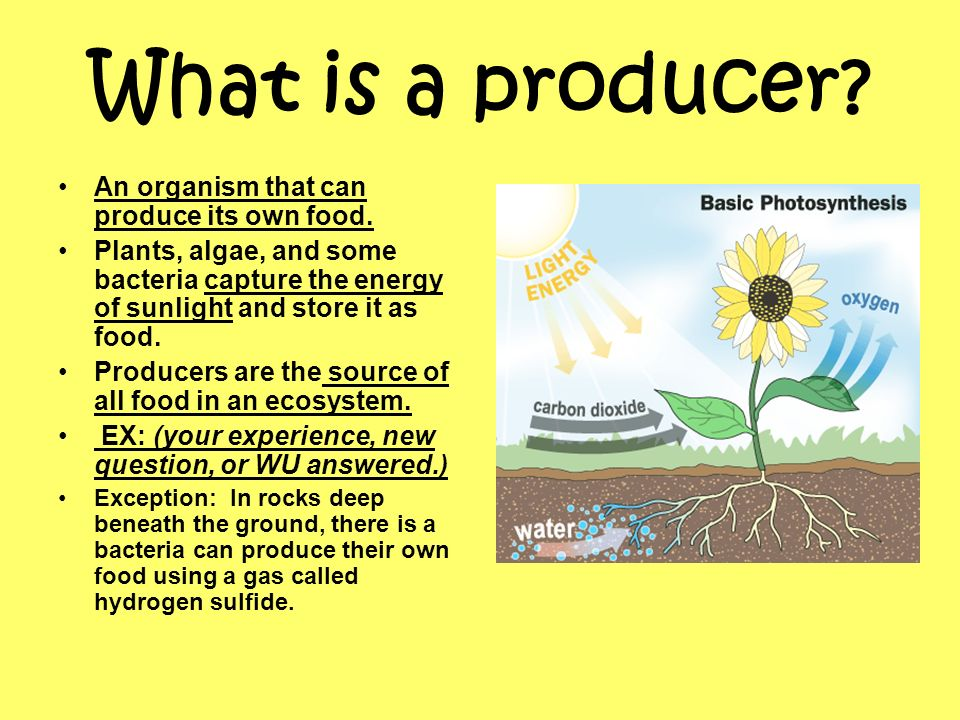 How is an organisms energy role determined  ppt download