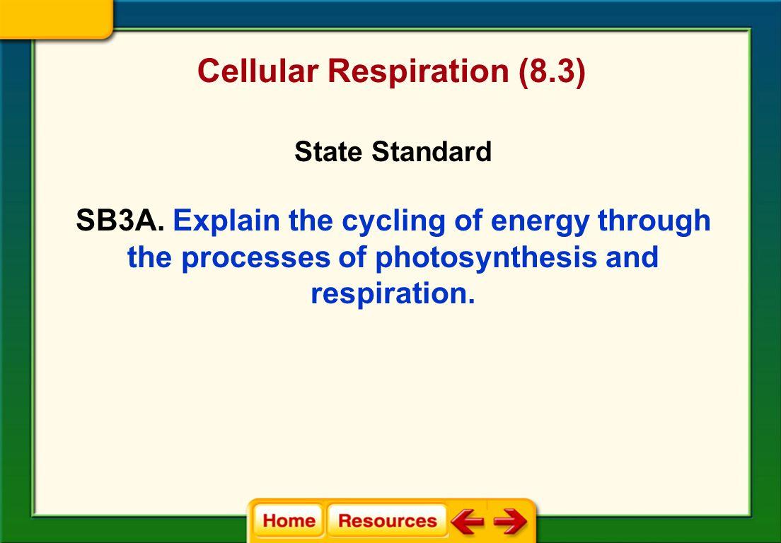 Cellular Respiration 8 3