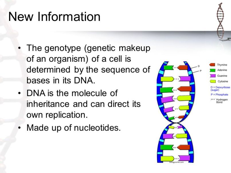 The Genetic Makeup Of An Organism Cool Gene Makeup Of An Organism Zieviewco