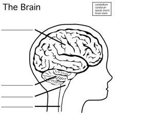 Nervous System 6th Grade Health  ppt video online download