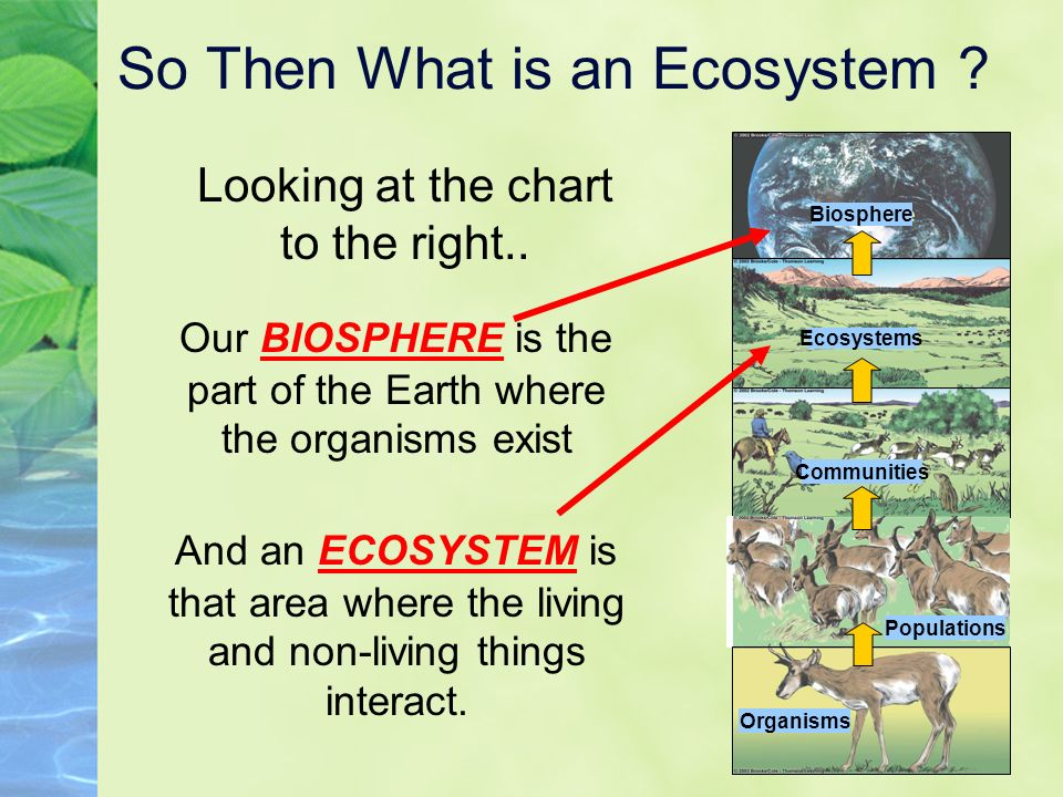 Image result for what is an ecosystem