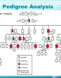 pedigree also analysis have you ever seen  family tree  do one rh slideplayer