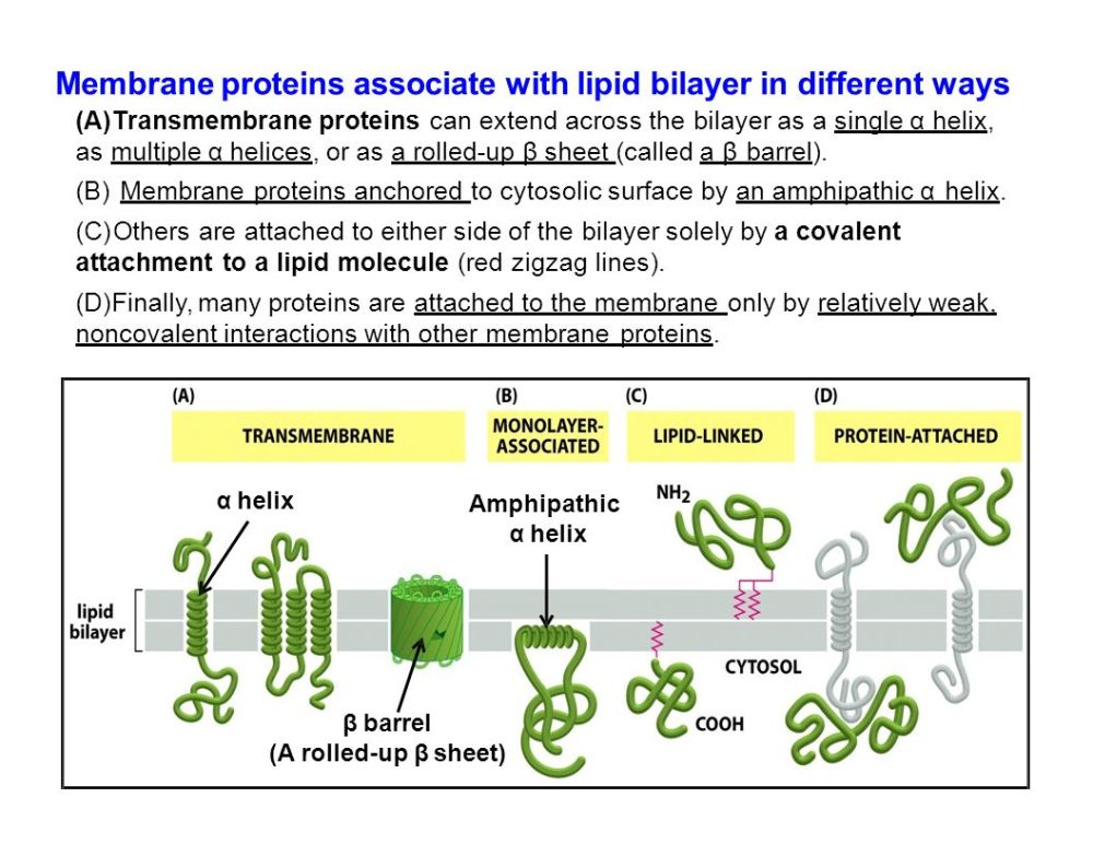 medium resolution of 18 membrane proteins associate with lipid