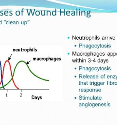 phases of wound healing wound clean up [ 1280 x 720 Pixel ]