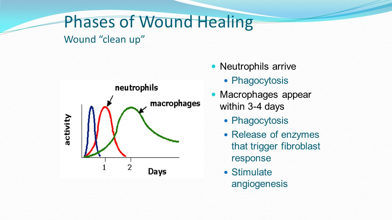 hight resolution of phases of wound healing wound clean up