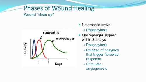 small resolution of phases of wound healing wound clean up