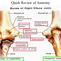 Forearm Bones Diagram Kicker Wiring Upper Extremity Review - Ppt Download