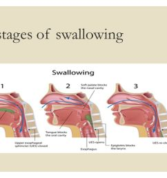 2 three stages of swallowing [ 1280 x 720 Pixel ]
