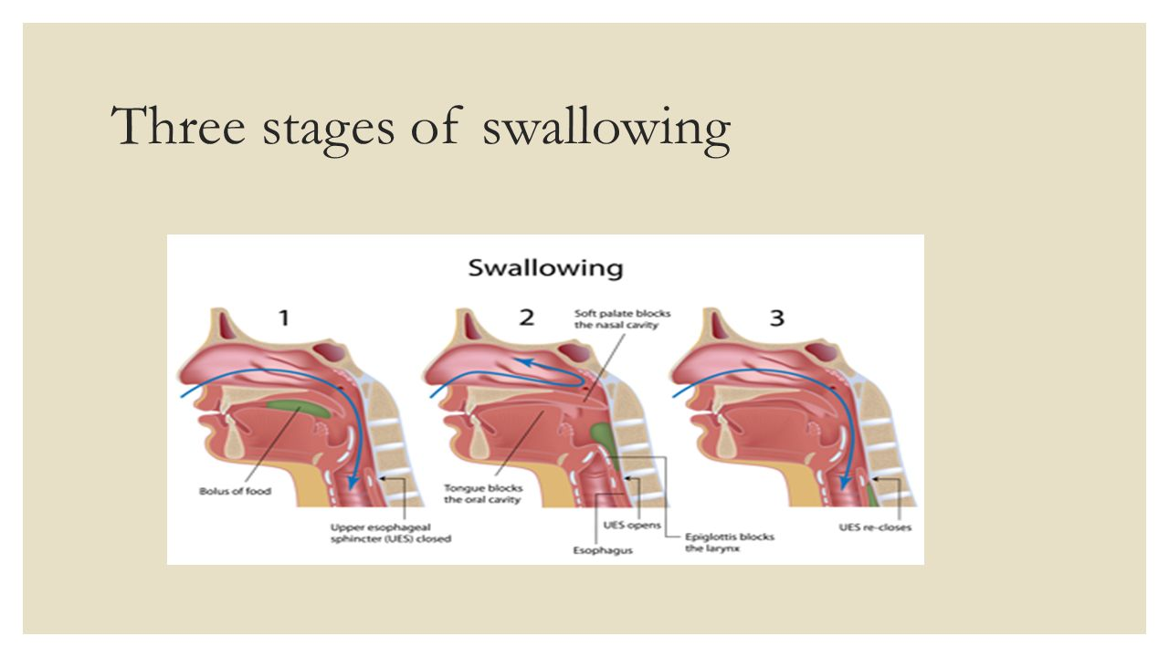 hight resolution of 2 three stages of swallowing