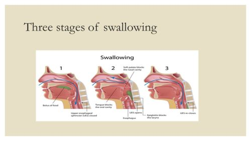 small resolution of 2 three stages of swallowing