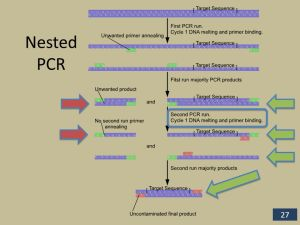 Polymerase Chain Reaction (PCR)  ppt video online download