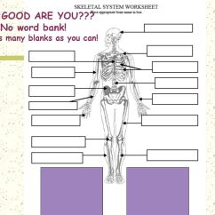The Human Skeleton Diagram Fill In Blanks Totaline Thermostat Wiring P374 Blank With Word Bank 16 15 Kenmo Lp De Trusted Online Rh 12 4 17 Mf Home Factory