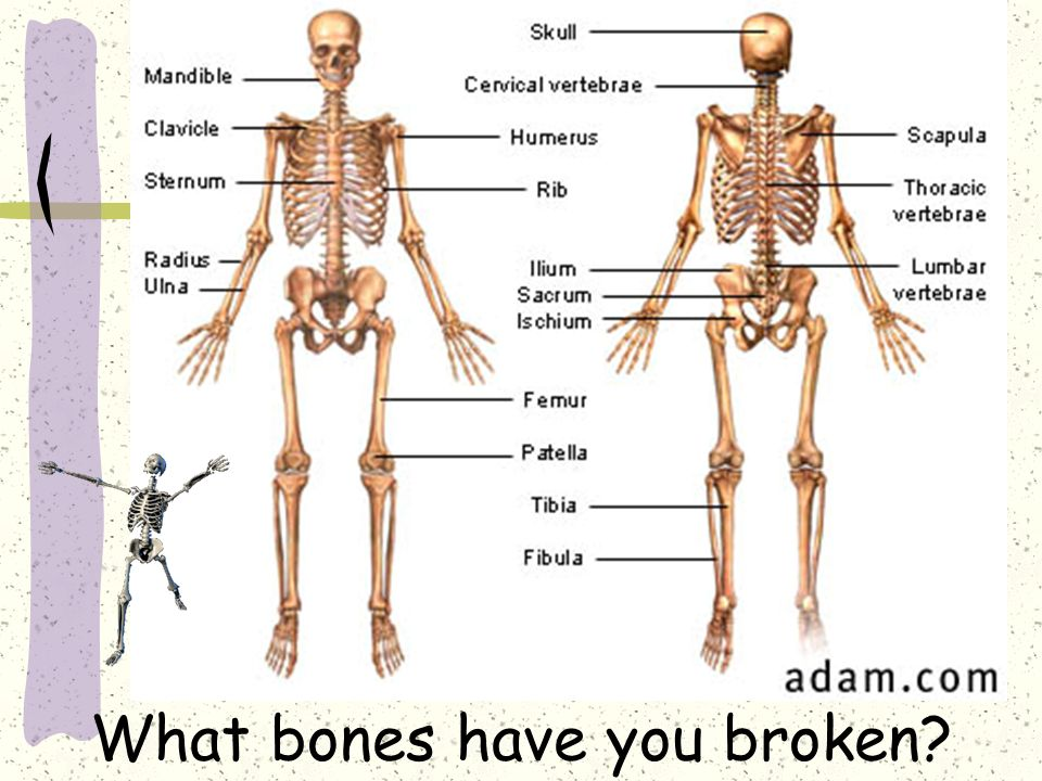 the human skeleton diagram fill in blanks vw t5 towbar wiring how good are you no word bank as many can 4 what bones