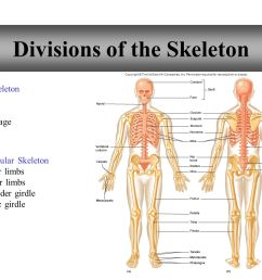 22 divisions of the skeleton [ 1365 x 1024 Pixel ]