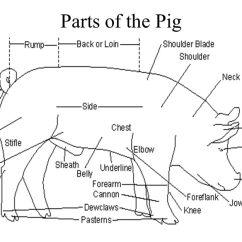 4 H Pig Diagram Goodman Furnace Parts Breeds Great Installation Of Wiring A Swine Diagrams Best Rh 64 E V L Y N De Lamb Body