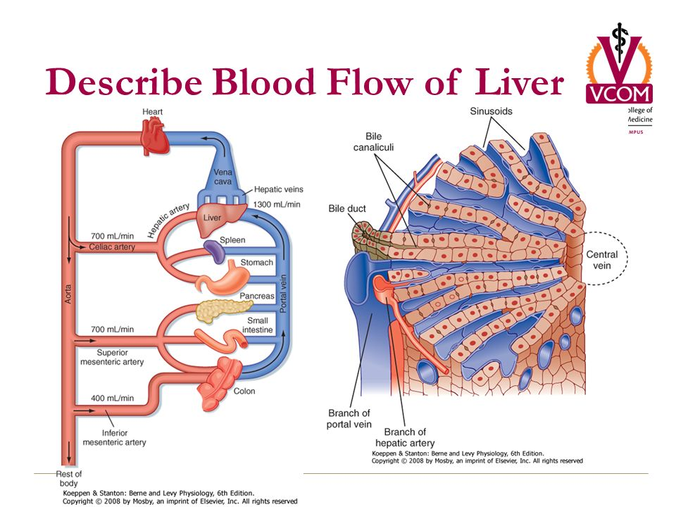 hepatic portal vein diagram gm factory radio wiring liver: transport and metabolic functions i - ppt download
