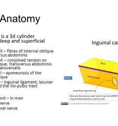 normal anatomy inguinal canal is a 3d cylinder between the deep and superficial inguinal rings  [ 1280 x 720 Pixel ]