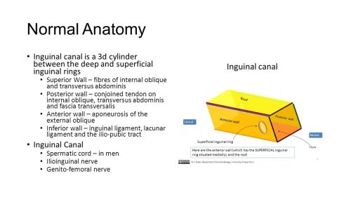 small resolution of normal anatomy inguinal canal is a 3d cylinder between the deep and superficial inguinal rings