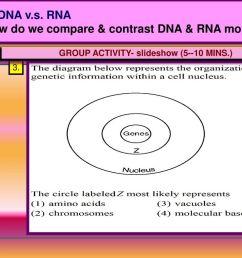 aim how do we compare contrast dna rna molecule [ 1024 x 768 Pixel ]