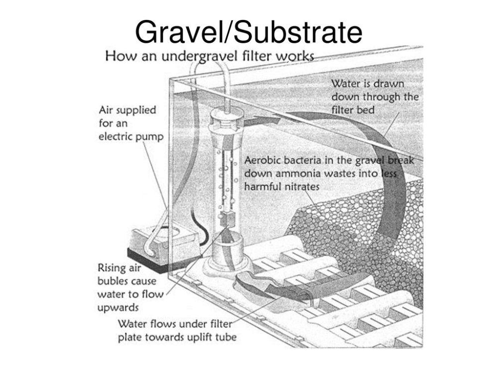medium resolution of 35 gravel substrate