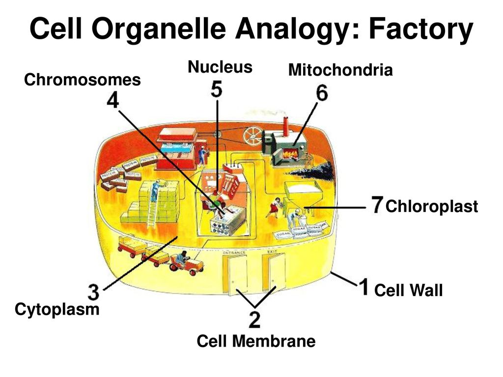 hight resolution of 40 cell organelle