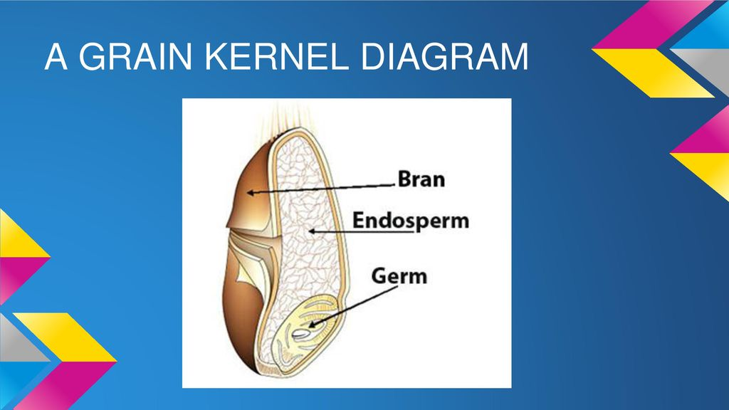 grain kernel diagram dsl splitter wiring parts of the whole a that has entire what is difference between and refined grains