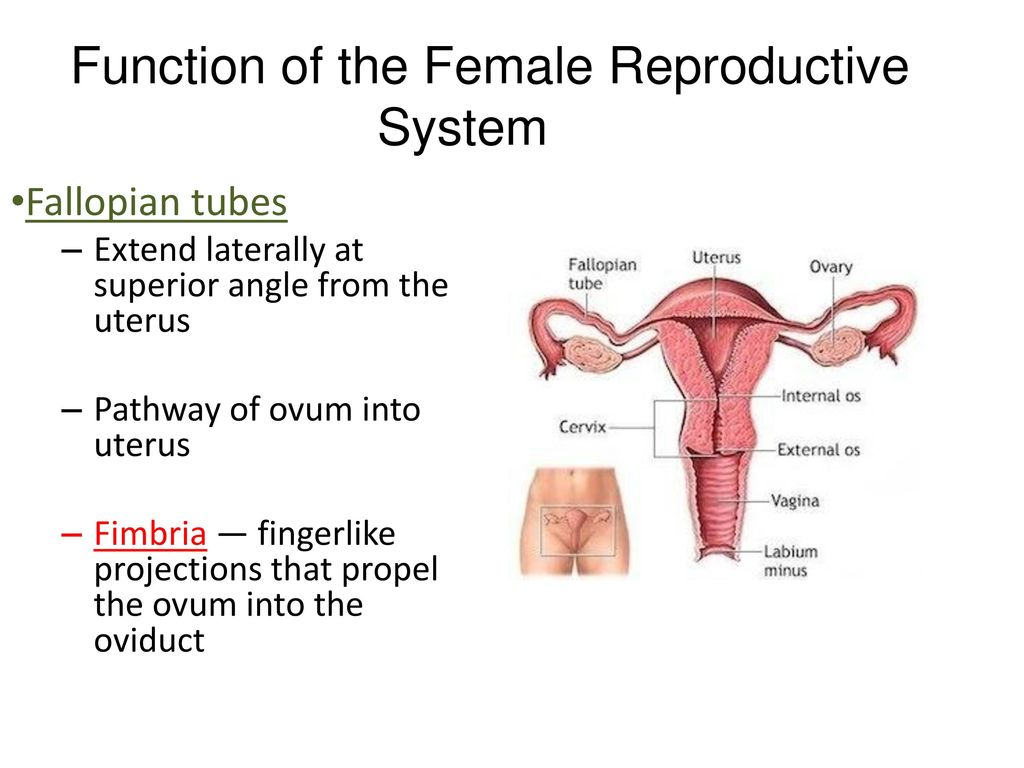 hight resolution of function of the female reproductive system