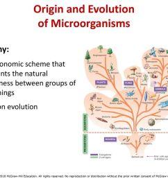 origin and evolution of microorganisms [ 1024 x 768 Pixel ]