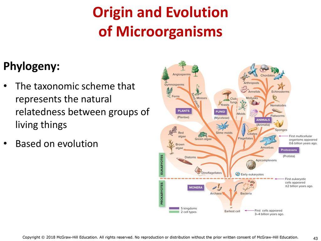 hight resolution of origin and evolution of microorganisms
