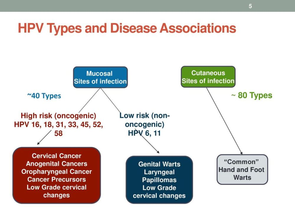 medium resolution of hpv types and disease associations