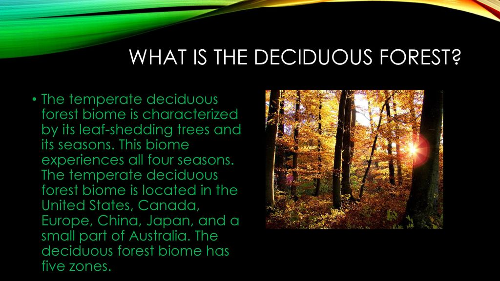 A forest characterized by trees or plants, shedding its leaves annually is known as a deciduous forest. The Temperate Deciduous Forest Ppt Download