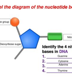 label the diagram of the nucleotide below [ 1024 x 768 Pixel ]