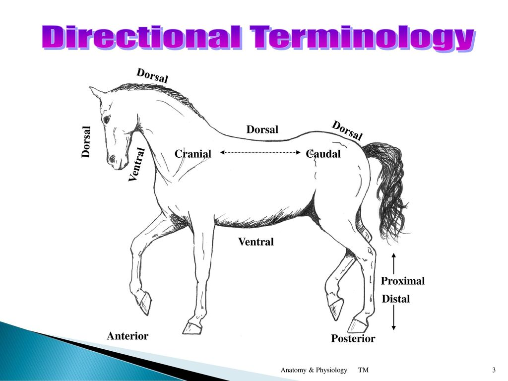 Directional Terminology Worksheet