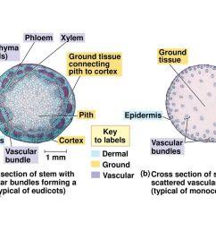 64 sclerenchyma fiber cells  [ 1024 x 768 Pixel ]