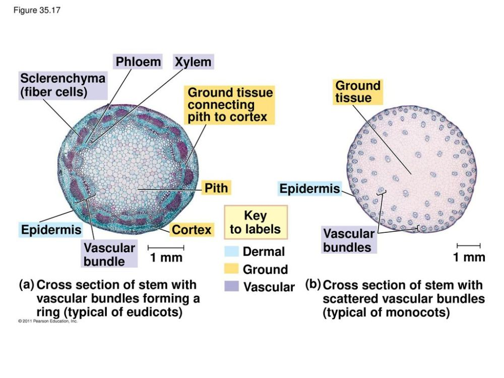 medium resolution of 64 sclerenchyma fiber cells