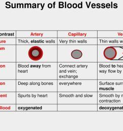 summary of blood vessels [ 1024 x 768 Pixel ]