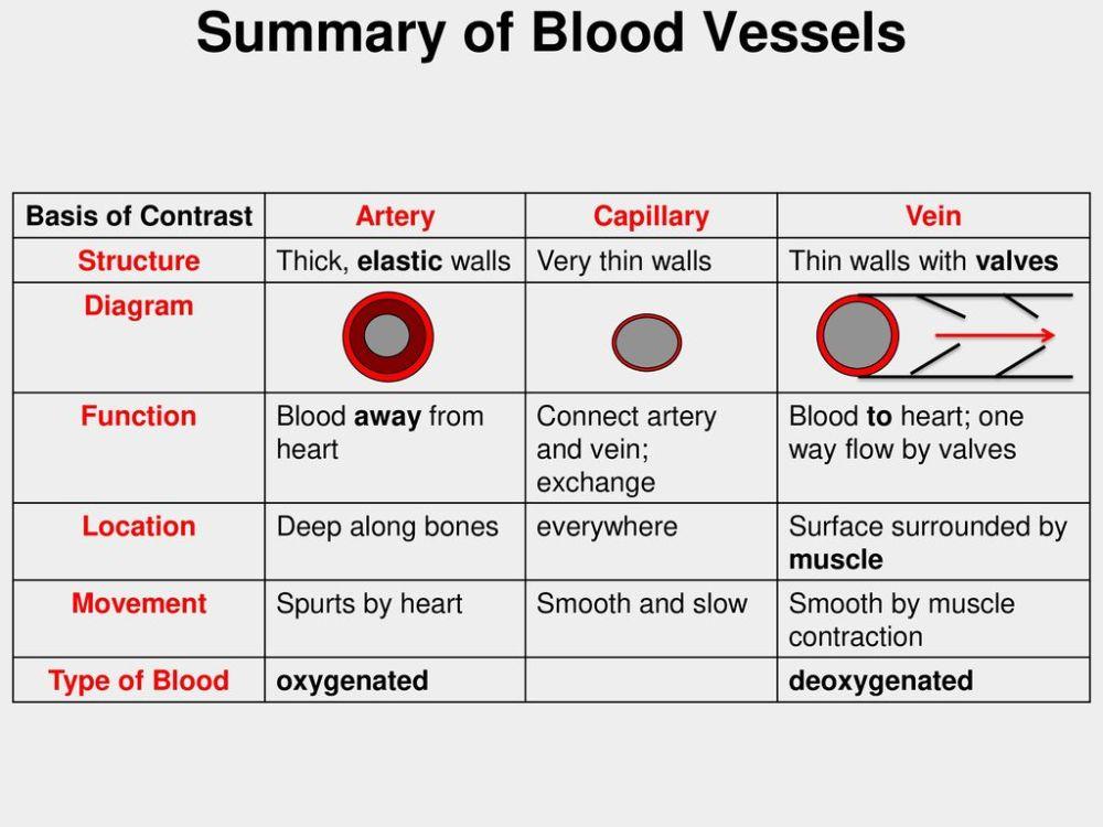 medium resolution of summary of blood vessels